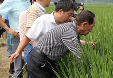 袁隆平:山东水稻有望破纪录