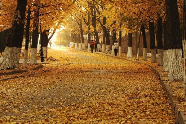徜徉八大关 观秋色赏落叶