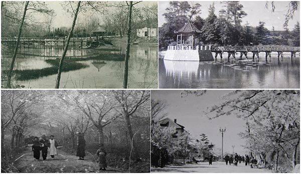 中山公园老照片系列:60年代游人结伴赏花