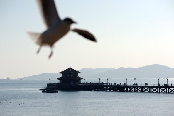 前海风光-海鸥