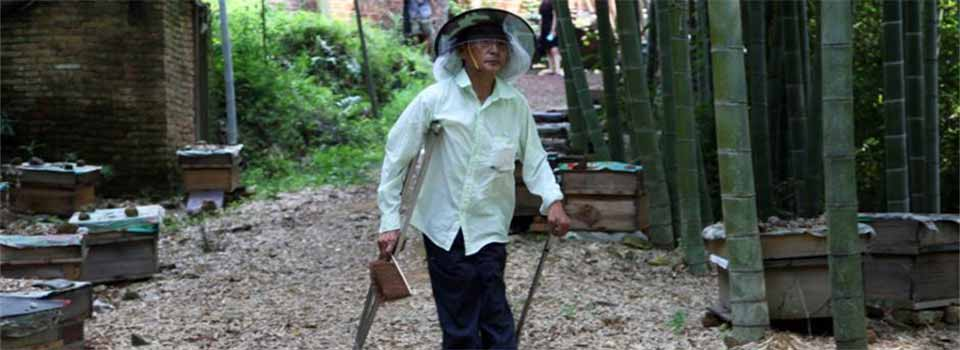 湖南六旬残疾人深山孤身养蜂50载 年产土蜂蜜600多斤