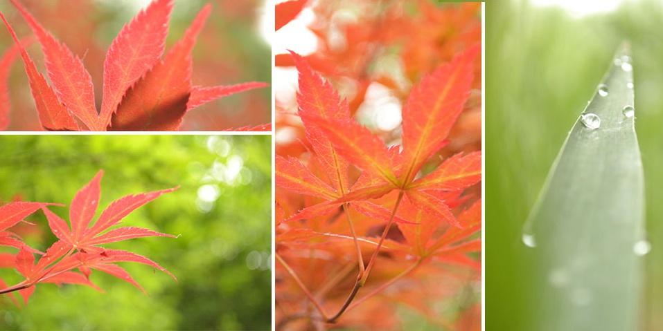 摄影控·秋分:风清露冷秋期半 一树红叶烧
