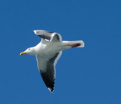 候鸟群集时:盘点秋冬十大观鸟圣地