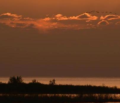 新疆博斯腾湖上演迷人初夏风光