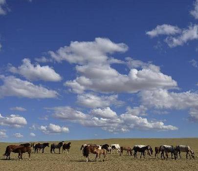 #(生态)(2)夏天到草原来看云