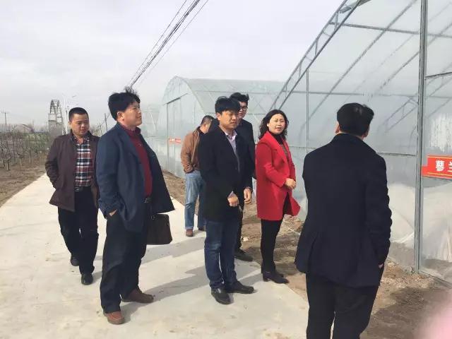 沽河两岸蔬菜产业大户纷至蓼兰建基地