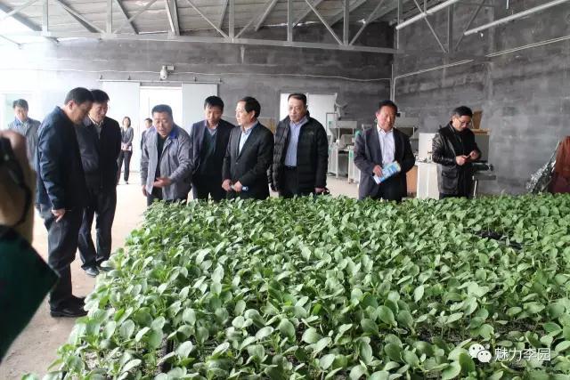 青岛市人大常委会副秘书长宋春康一行实地调研青岛乐义现代农业科技示范基地