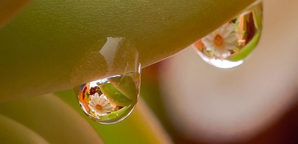 换个姿势邂逅春色 水珠里的花儿您见过吗
