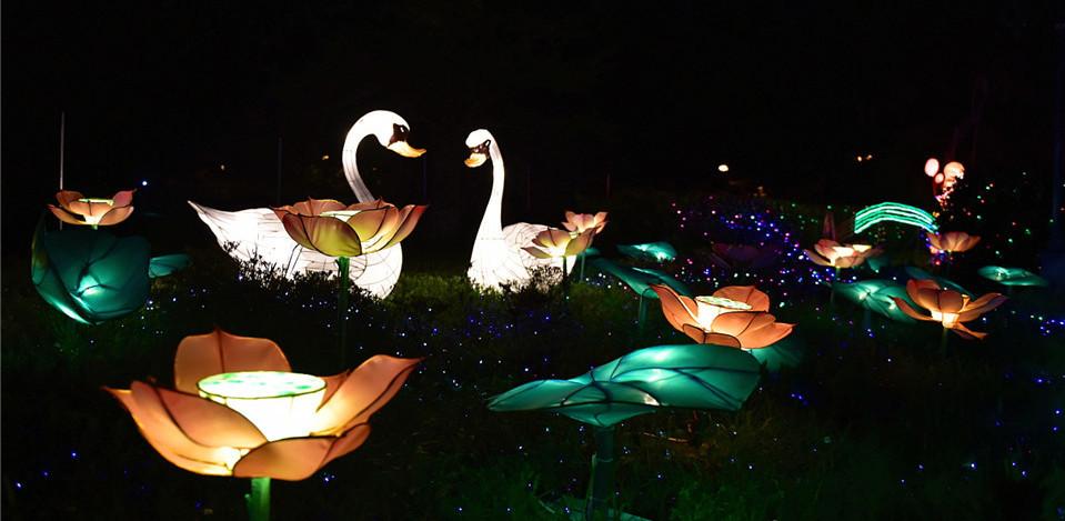 消夏纳凉好去处!中山公园花灯盛宴璀璨绽放