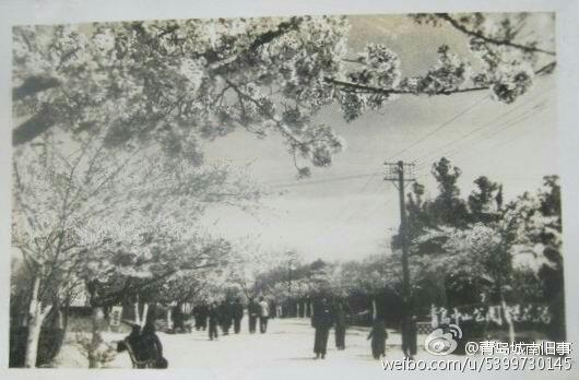20世纪50年代青岛老照片