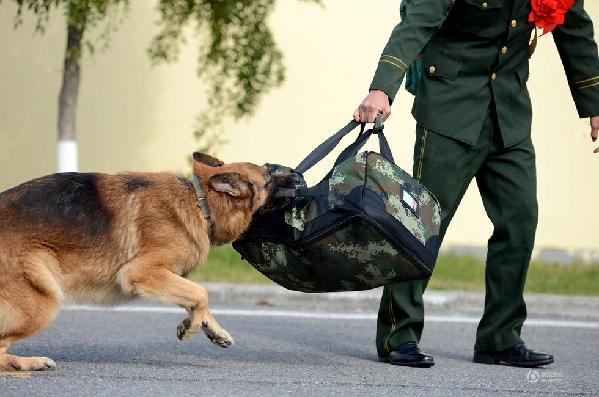 背行李的动物图片