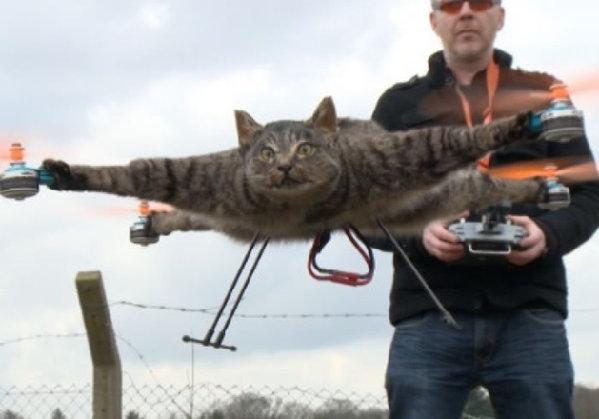 艺术家制作动物标本无人机 猫咪老鼠飞上天