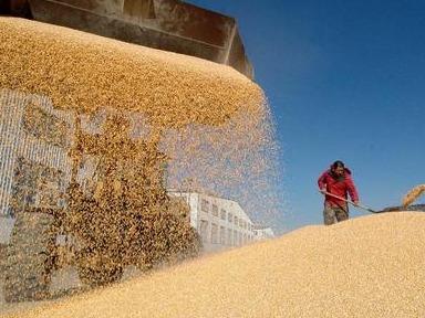 2020年全國糧食總產量13390億斤