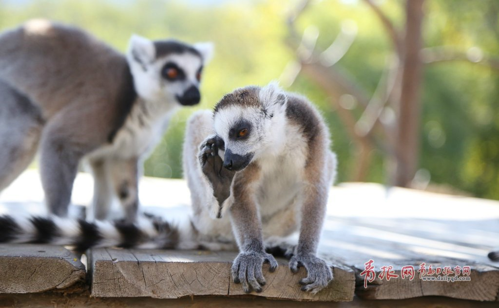 福利!青岛森林野生动物园13周年庆推出半价门票