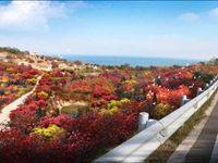 打造东部海岸靓丽名片 即墨今年将栽植2560亩红叶林