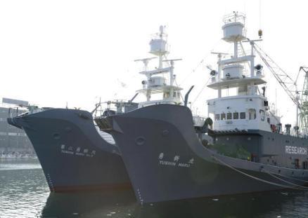 """不顾反对推进捕鲸活动 日本执意""""升级""""捕鲸船"""