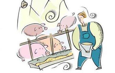 需求疲软猪价走低 生猪养殖户面临成本上升压力