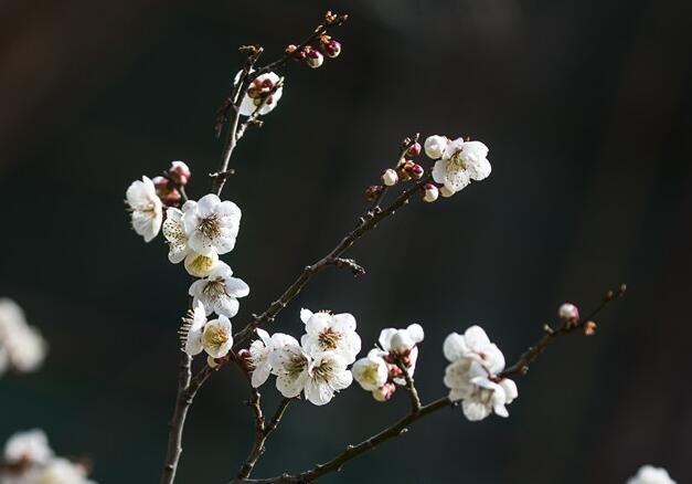 """5日4时13分""""清明"""":花在枝头颤,蕊随风飘香"""