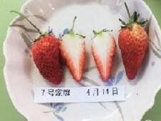 """""""全民见证人""""实验结果出炉:草莓可以这样保鲜7天"""