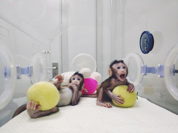细胞克隆猴、探测引力波:这些科学成果或改变生活