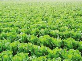 """首批""""青岛农品""""名单出炉 41个农产品品牌上榜"""