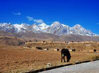 青岛第八批援藏干部进藏两年 助力4000余人脱贫