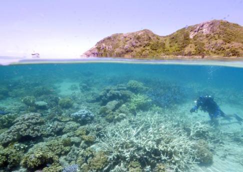 展示稀有生物 澳邮政推出大堡礁海底景观系列邮票