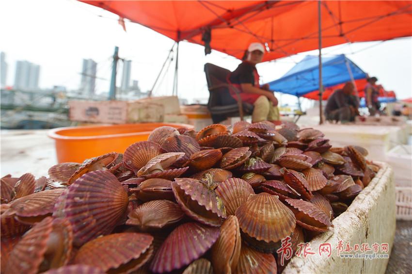 在山东青岛小港码头上销售的海鳗鱼胶州湾红皮扇贝.