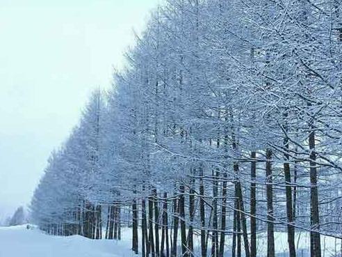 日本北海道大雪 约2000名旅客受困新千岁机场