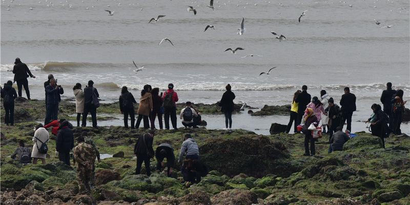挖蛤蜊、捡海螺……市民游客栈桥海域赶海忙