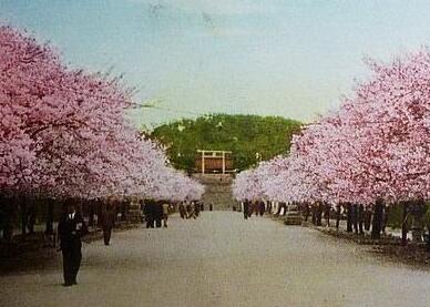 闻一多笔下的青岛:绚丽的樱花开得像天河
