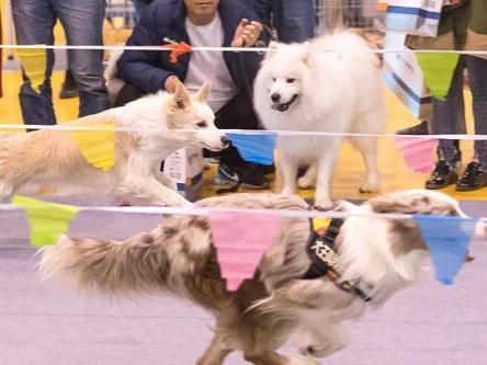 萌寵狂歡,2019青島寵物展即將盛大開幕!