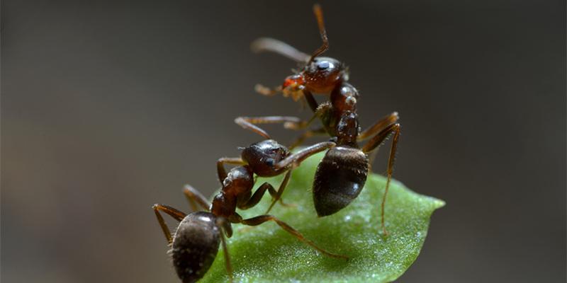 奇妙有趣!微距镜头下的蚂蚁世界