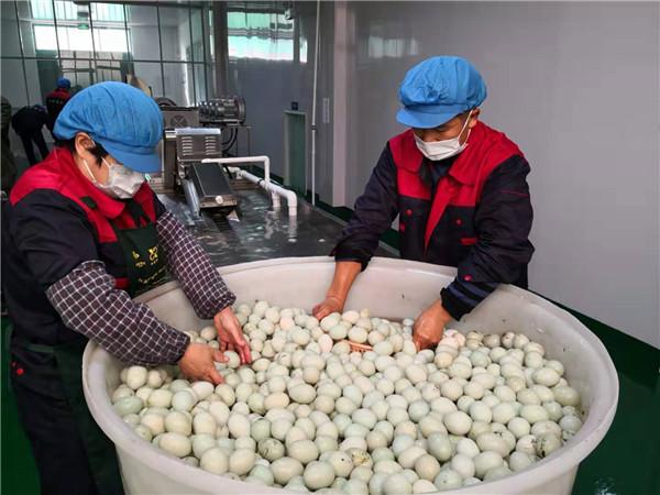 有了这条咸鸭蛋生产线,即墨马大姐多养了4000只蛋鸭