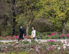 中山公園將建首個園藝市集 給花農提供免費場地