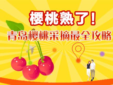 樱桃熟了!青岛樱桃采摘最全攻略
