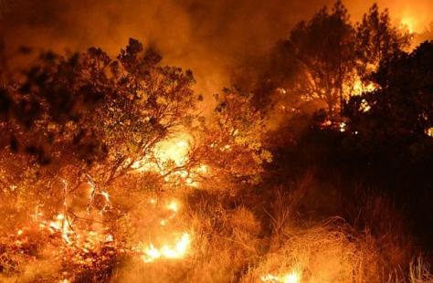 俄远东一昼夜新增7处森林火灾 过火面积增145公顷