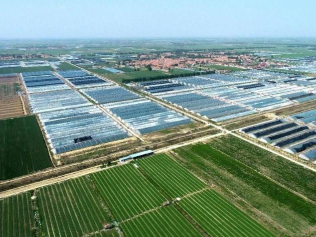 青島唯一!萊西入選山東省農產品出口產業聚集區