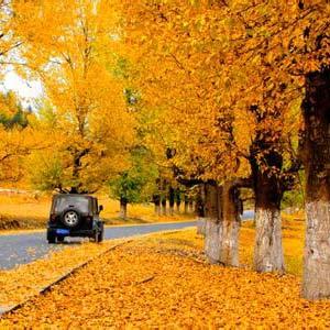 凄凉提醒你,秋天来了