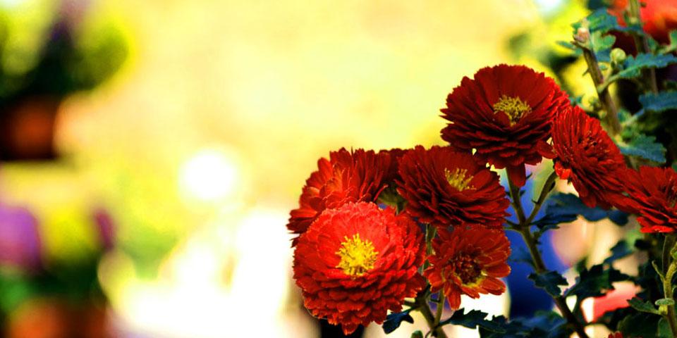 【高清】夏已去,秋未央 中山公园赏花忙